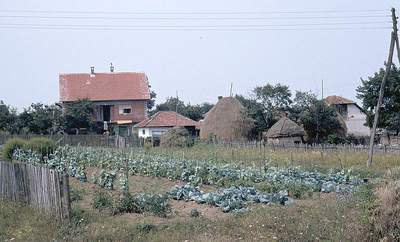 Vegetable garden and haystacks in a household compound in Orasac, Serbia 1984