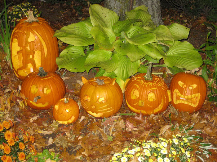 Display of carved pumpkins at the 2011 annual pumpkin festival in Keene, New Hampshire, USA. Photo credit: Christiane Cunnar