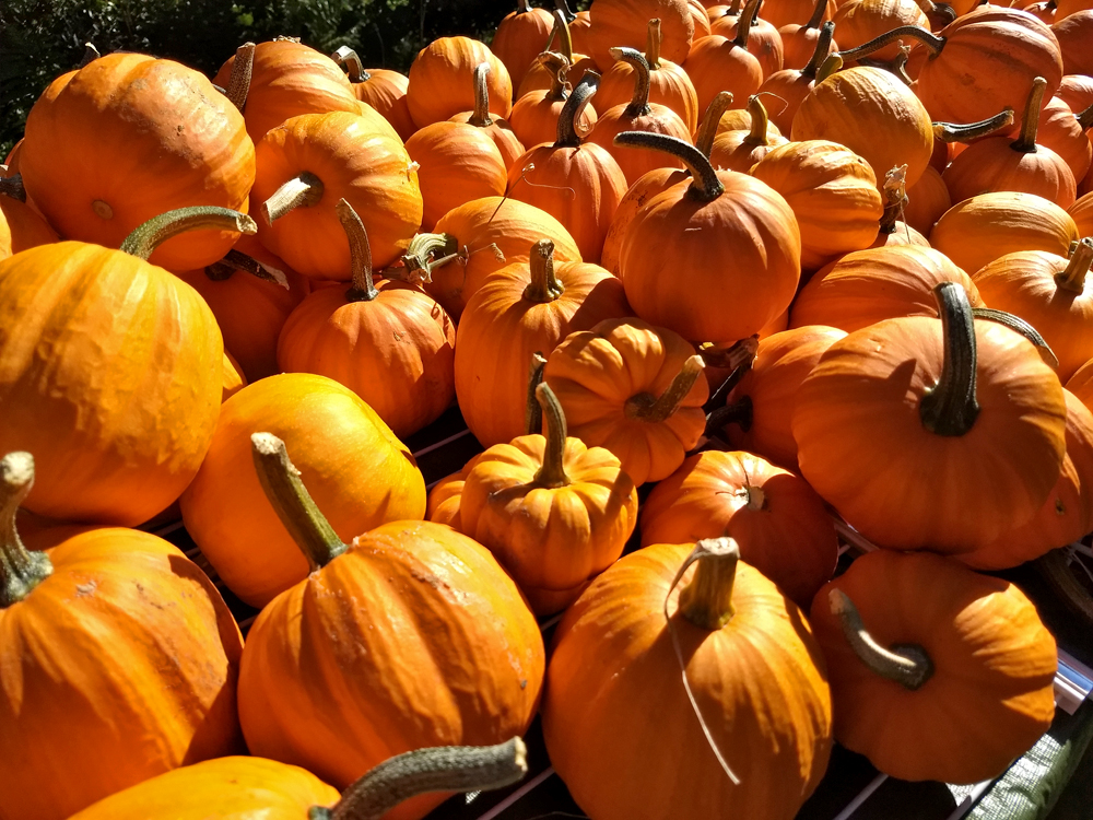 Pumpkins: Not Just for Carving and Dessert!