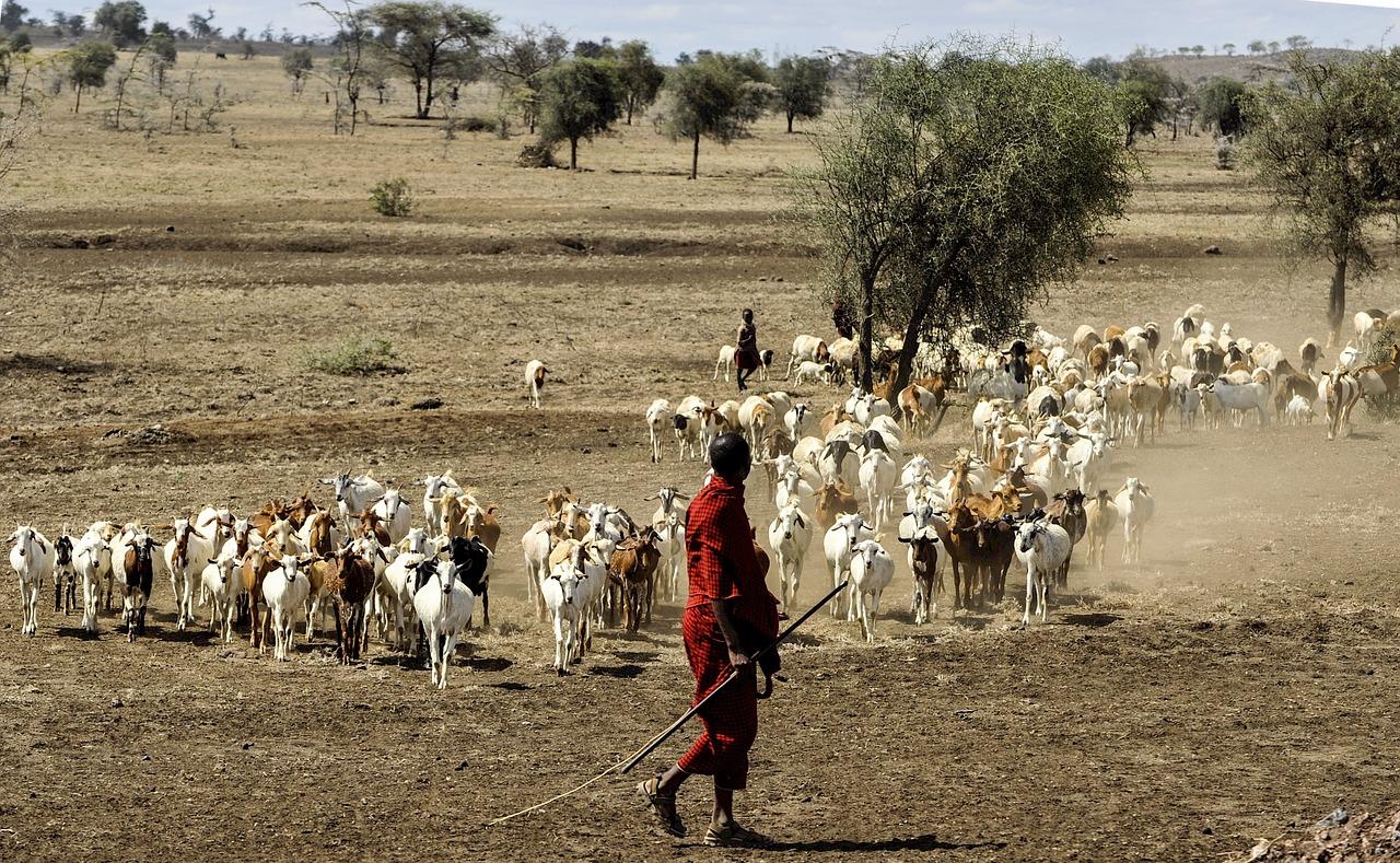Maasai Herdsman, Tanzania