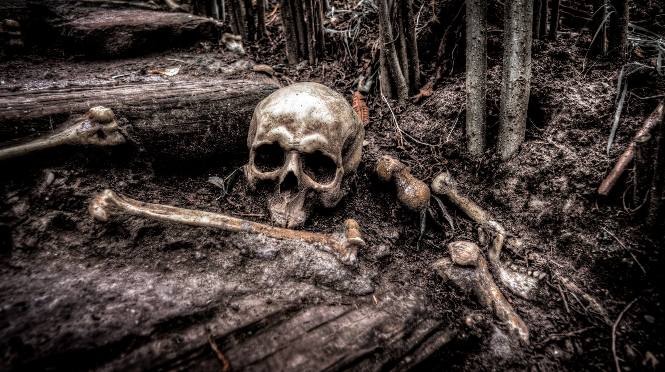 bones in woods