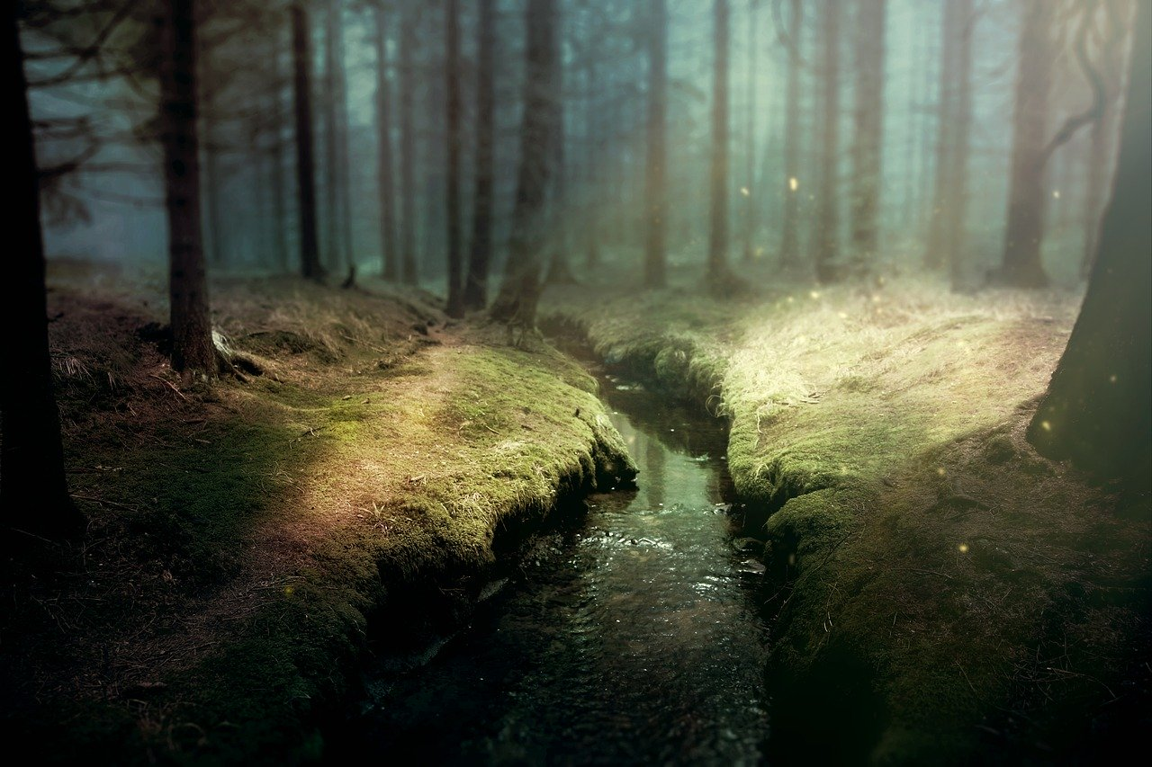 mystical stream in forest
