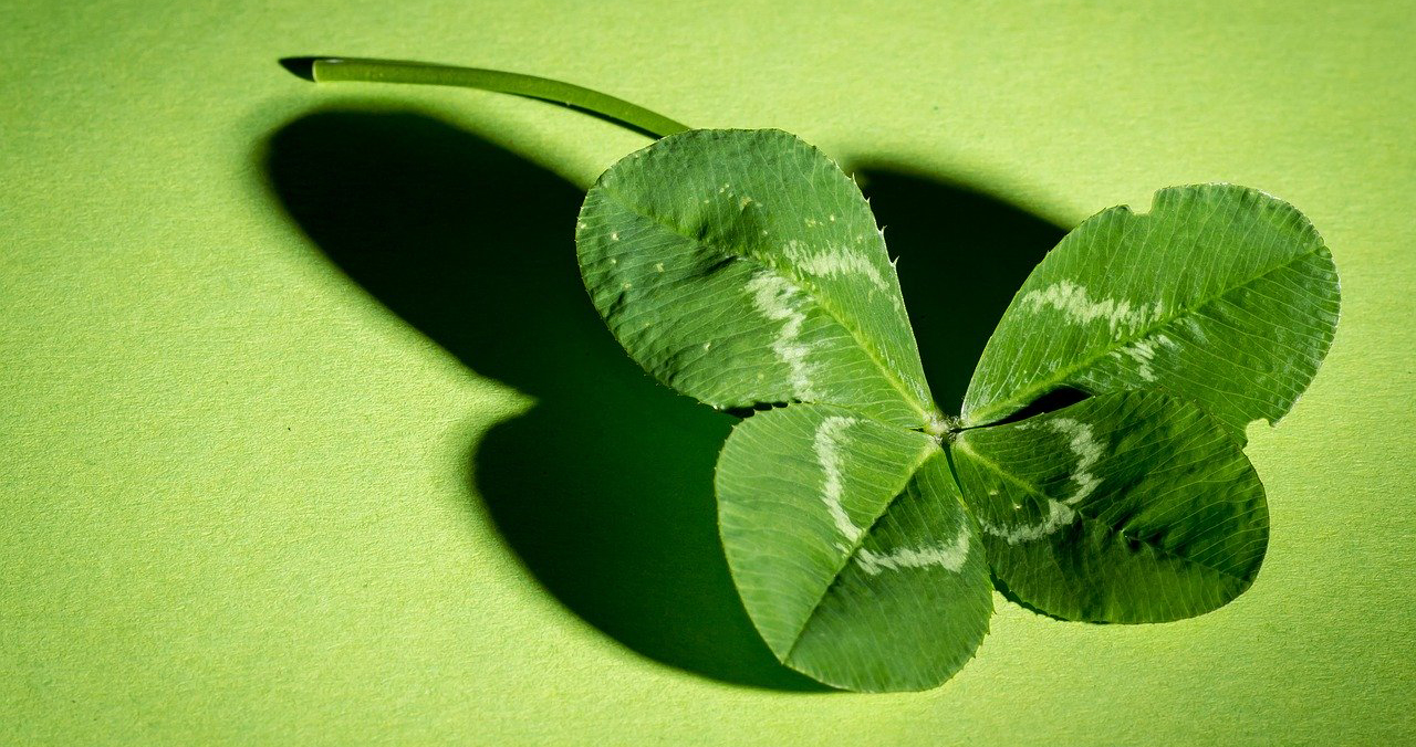 shamrock on green background