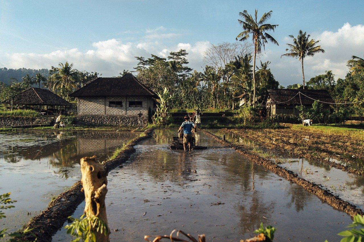 irrigation plot water